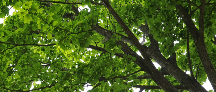 The Benefits Of Proper Tree Care